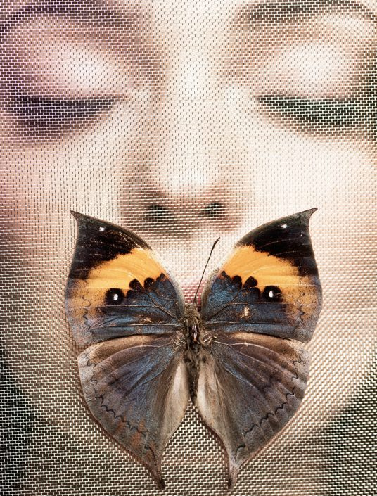 Beauty Butterfly Marco Di Filippo 3