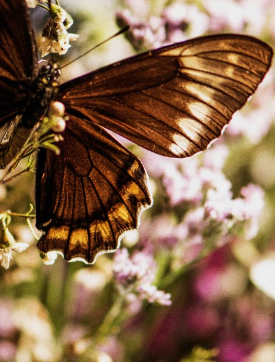 Beauty Butterfly Marco Di Filippo 7